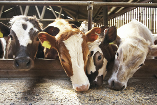 Farm Animal Welfare and Ethical Investment
